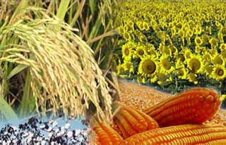 Seed company Advanta to merge with parent agro-chemicals maker UPL