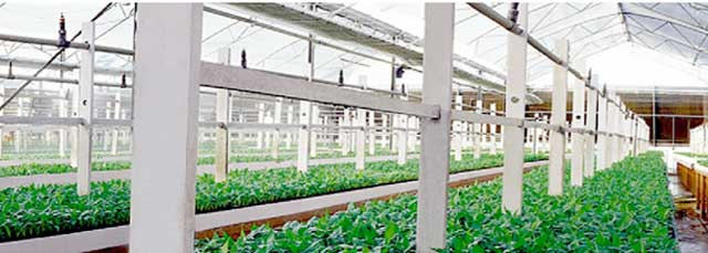 Jain Irrigation to raise around $103M from Mandala Capital
