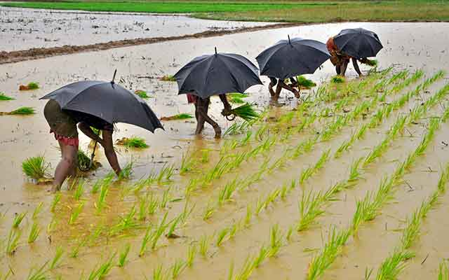 India to get above normal monsoon rains this year: IMD