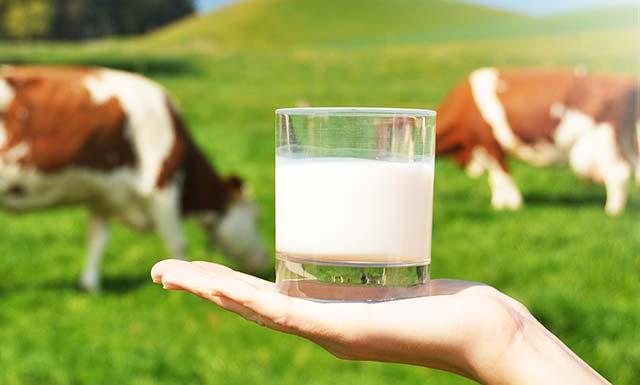 Parag Milk raises $52M from anchor investors