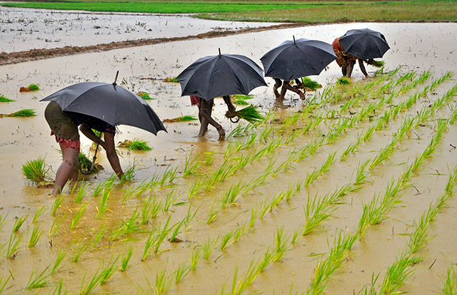Tracking the monsoon: Rains aplenty, but will inflation cool down?