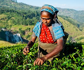Shooter Abhinav Bindra, Franchise India invest in tea startup The Kettlery