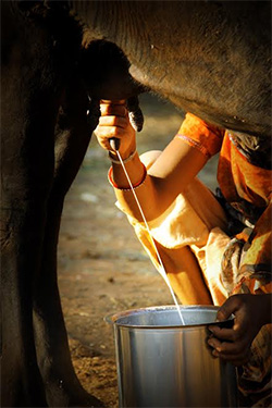 BCCL's Brand Capital to bet on Gurgaon dairy startup