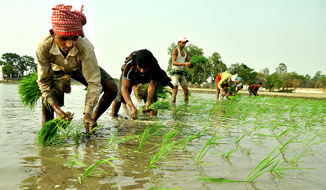 Accel Partners leads $10 mn Series B round in AgroStar