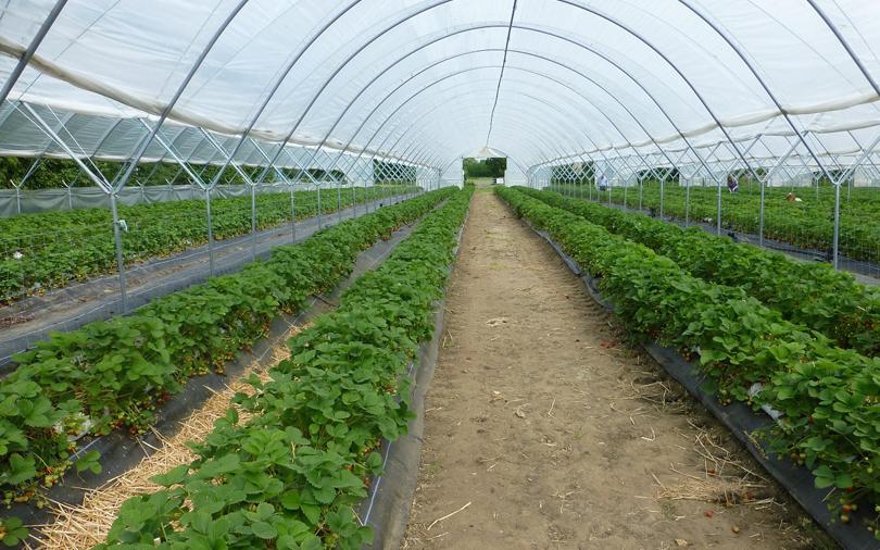 Farming startup Farmizen raises seed round