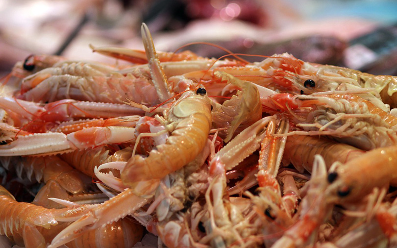 Seafood export firm Sandhya Marines files draft prospectus for IPO