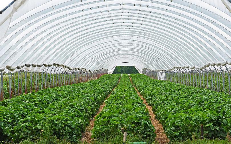 Rairah Corp backs Pune business scion's fresh produce firm Earth Food