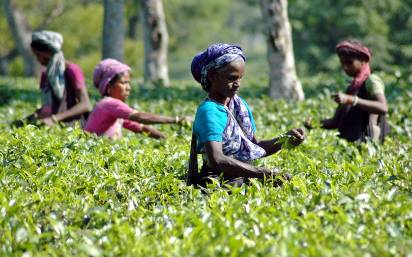 Mcleod Russel to sell 12 tea estates for $70 mn