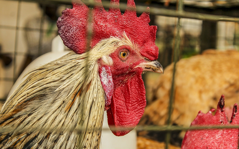IFC to invest $23 mn in Hyderabad poultry firm Srinivasa Farms