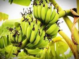 Pioneering Ventures to take full control of Indian banana producer